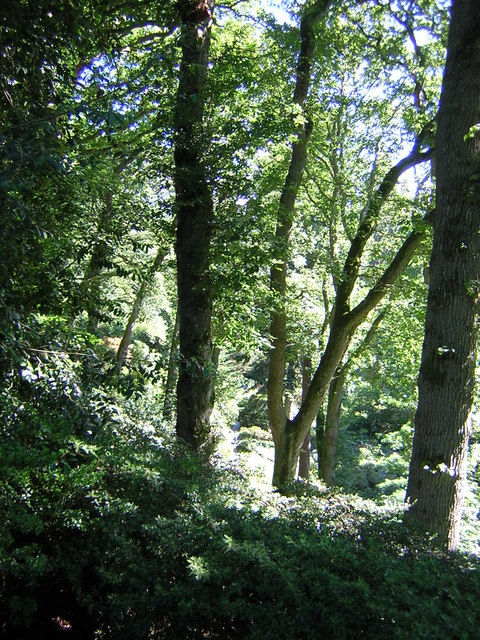 Bodnant Woodland