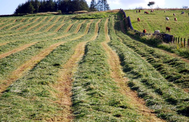 Make Silage when the Sun Shines