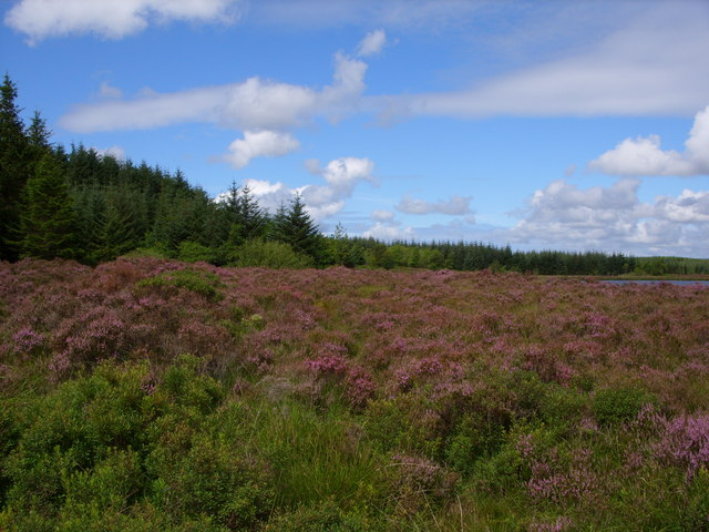 Heather Banks at Loch of Fyntalloch