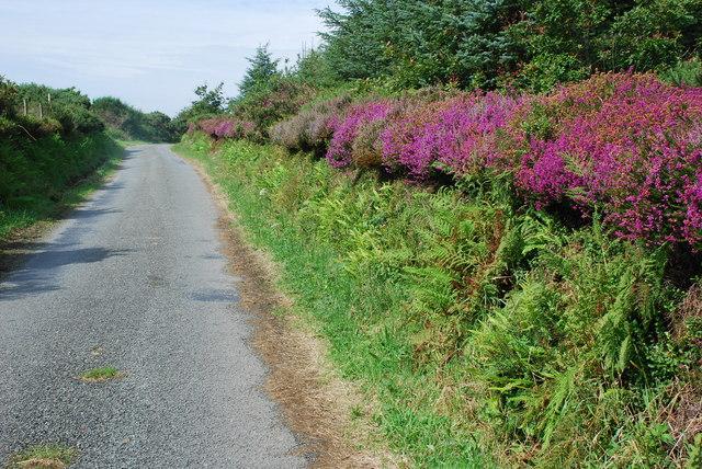 Lôn wledig ger Ynys Creua - Country lane near Ynys Creua