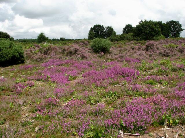 Buxton Heath Nature Reserve