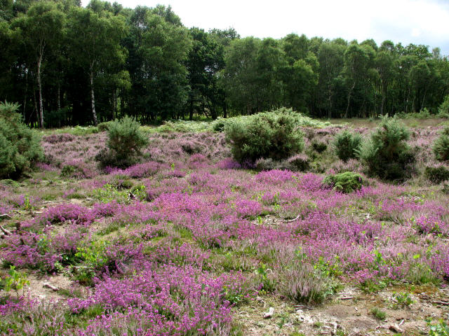 Buxton Heath Nature Reserve