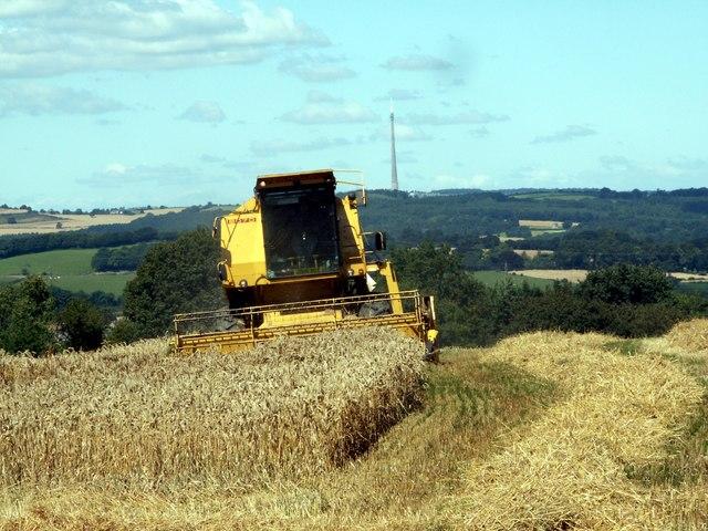 Harvesting at Hall Royd