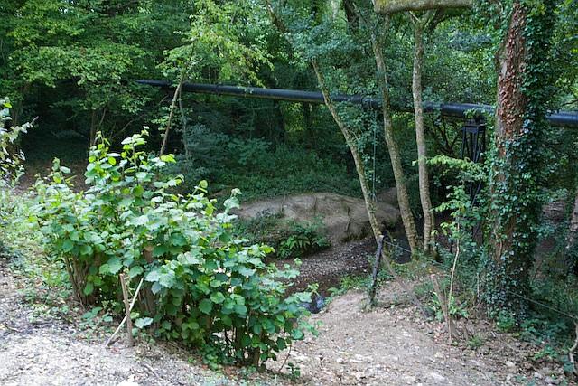 Palmer's Brook crosses under dismantled railway line in Fattingpark Copse