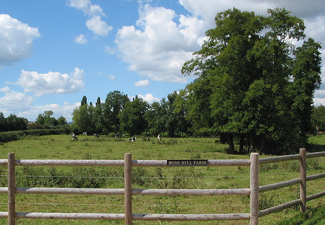 Grazing land at Rose Hill Farm