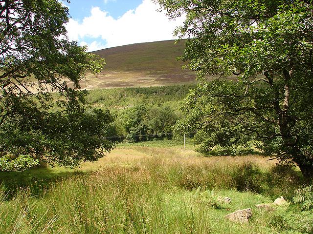 Coed yr Allt and Mynydd Rhiw-Saeson