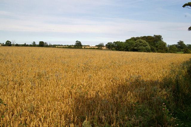 Looking towards West Field