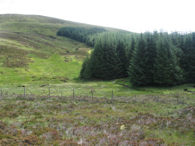 Forest edge towards Beinn Bhan