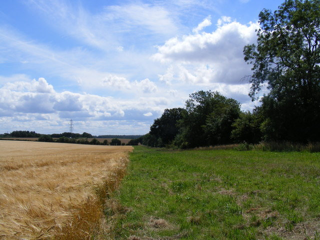 Hedgerow between Little Offley and Telegraph Hill