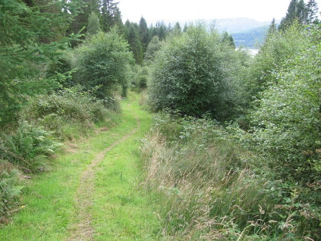 Sallochy forest trail