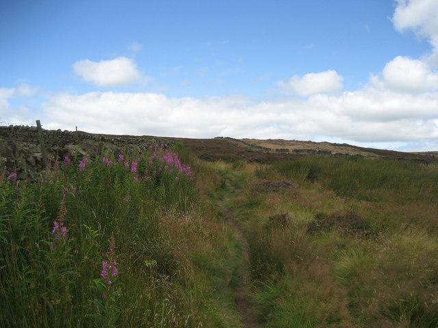 Onto Pinhaw Moor
