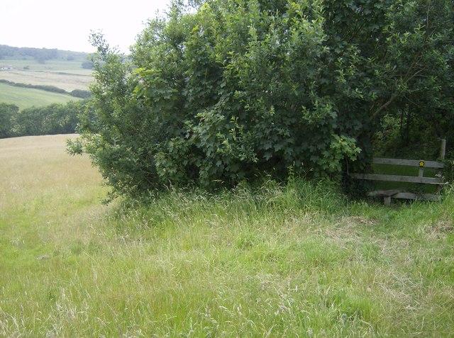 Footpath towards Wydcombe
