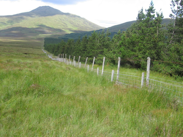 Forest edge below Beinn Uird