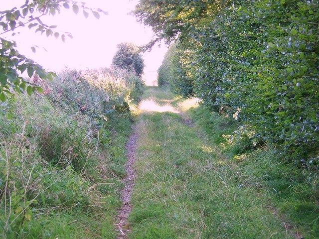 Byway near Down Barn, Homington