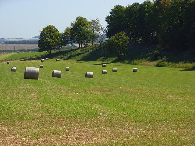 Hay meadow at Lopcombe Corner