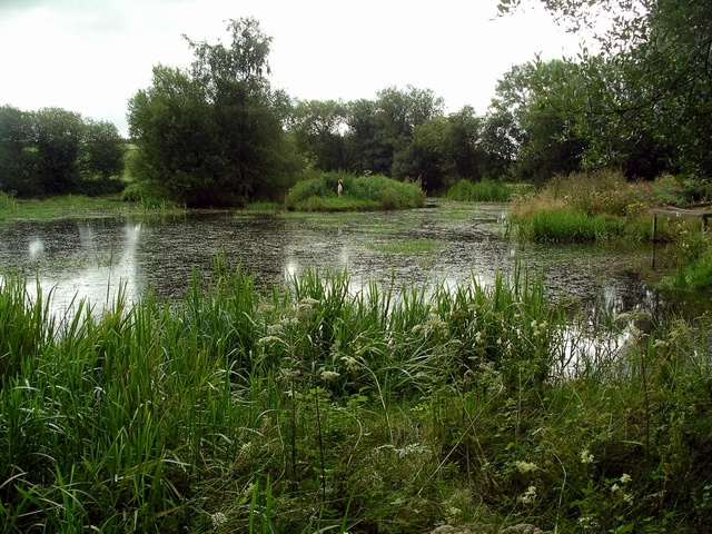 The pond, Eskrigg nature reserve