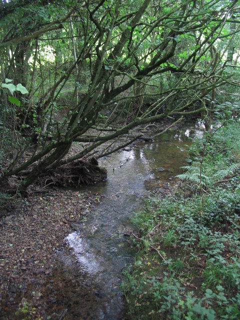 Headwaters of the River Brue