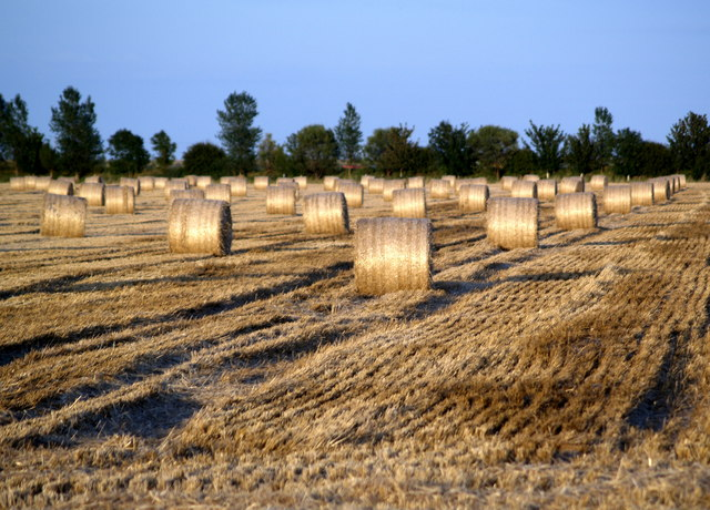 Straw Bales in the Evening Sun