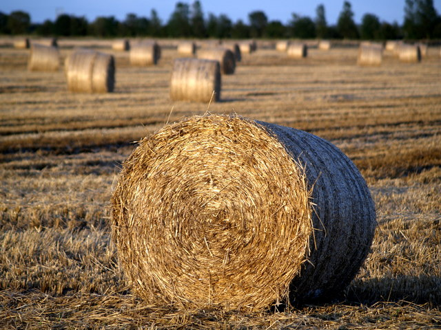 Straw Bale in the Evening Sun