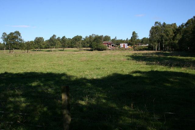 Forest Muir