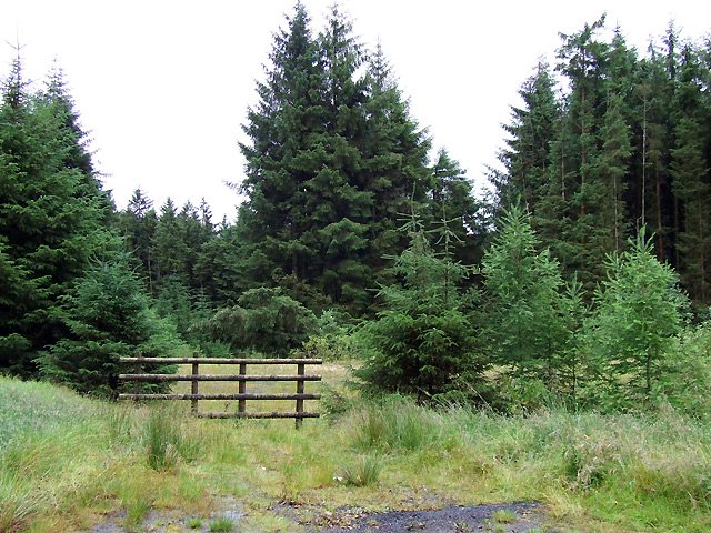 Forest Entry south of Figyn Blaenbrefi, Ceredigion