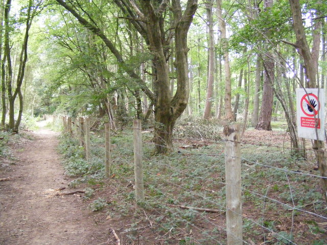 Footpath to Prestonhill enters woods near Lady Grove