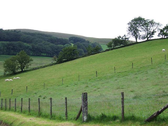 Grazing Land, Cwm Brefi, Ceredigion