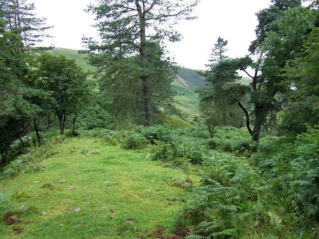 Trees near Afon Dulas, Ceredigion