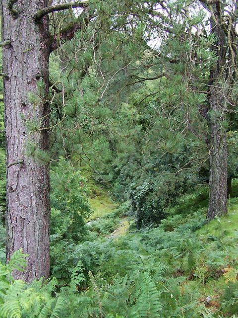 Woodland around Afon Dulas, Ceredigion