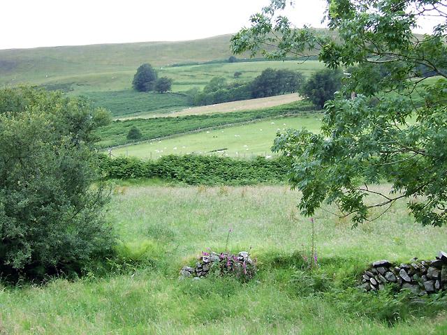 Farmland  by Afon Brefi, Ceredigion