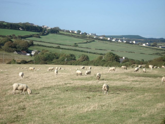 Sheep grazing near Castell-rhedyn