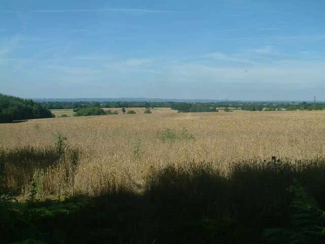 Looking towards Floyer's Coppice