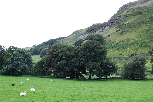 Grazing below Craig y Foelallt, Cwm Brefi, Ceredigion