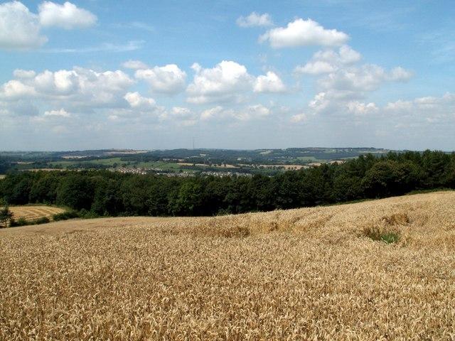 Cornfield at Champany Hill