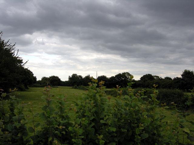 Narrow Field