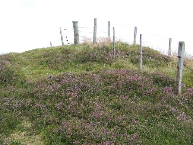 Fence on Carlunie Hill