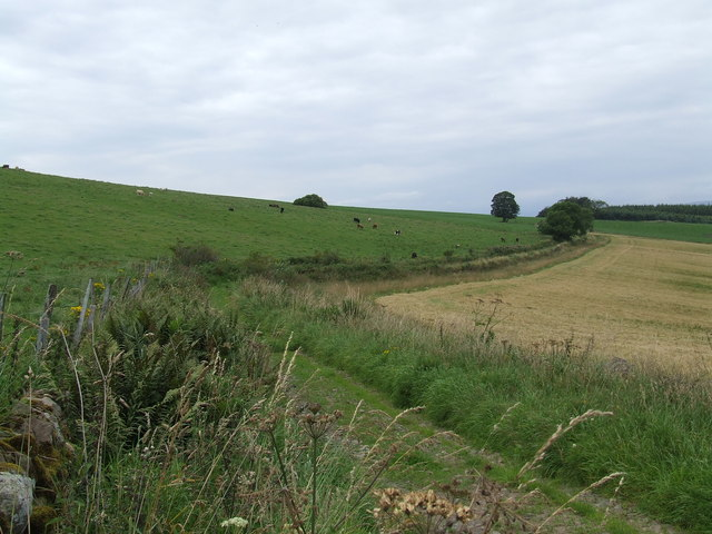 Track below Castleward Hill, East Denoon