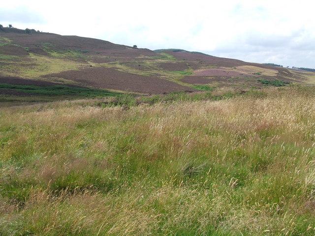 Valley of the Halning Burn