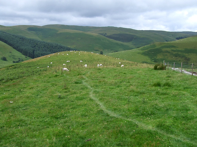 Sheeptrack by the Drovers' Road, by Nant y Rhiw, Ceredigion