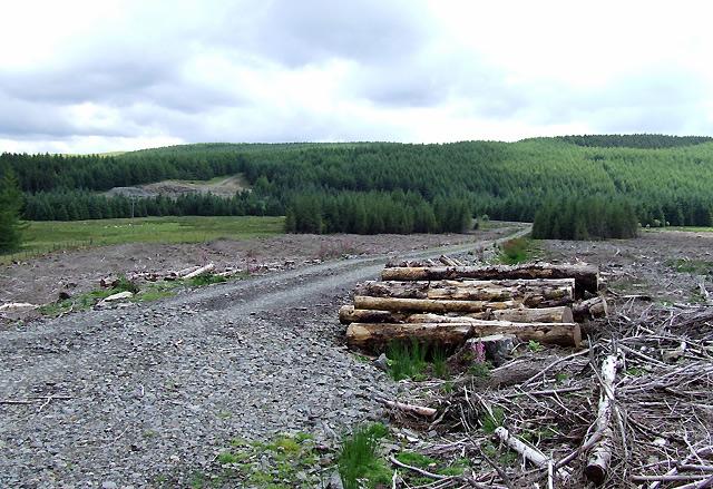 Felled Forestry near Bronbyrfe Farm, Ceredigion