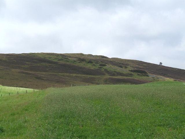 Field at Nether Handwick