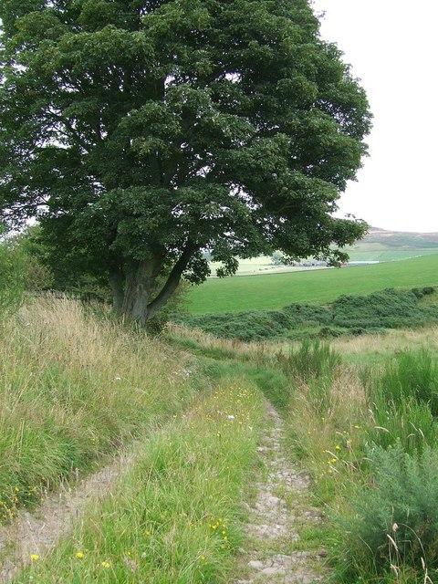 Tree beside the track, Nether Handwick