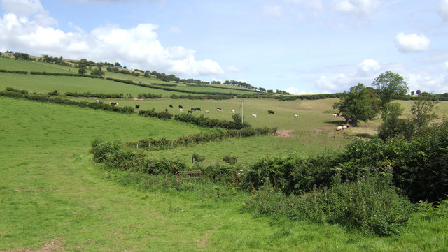 Zig-zag hedges and dairy pasture