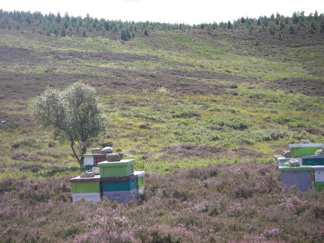 Hillside and beehives below Druimgallovie
