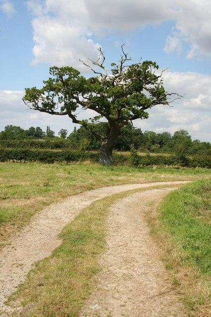 Oak at Gautby