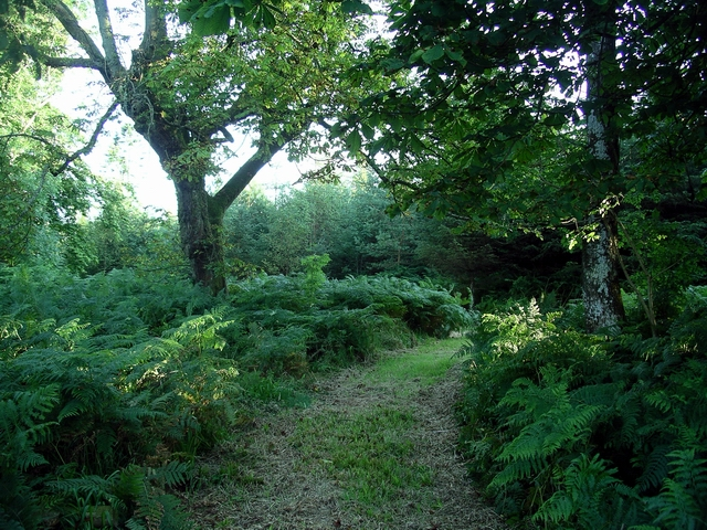 Trees and bracken, Rammerscales Wood