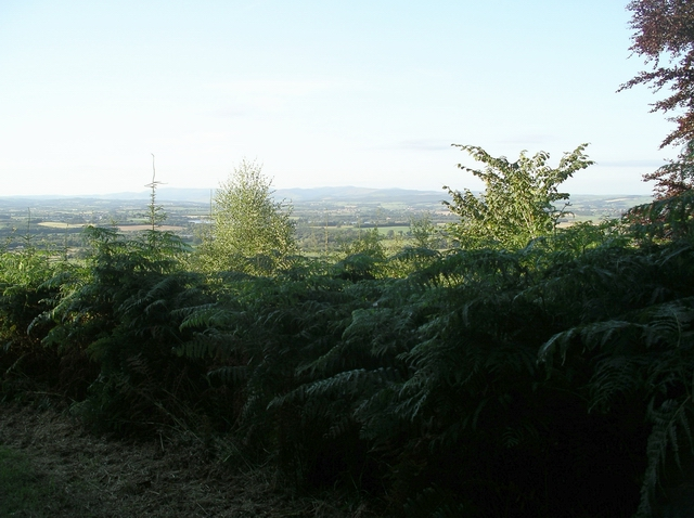 View over the trees, Rammerscales Wood