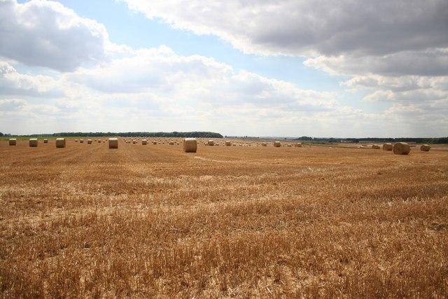 Stainfield cornfield