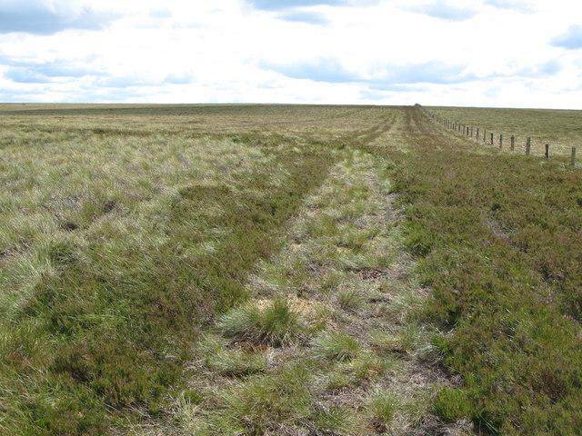 Moorland near the county boundary fence