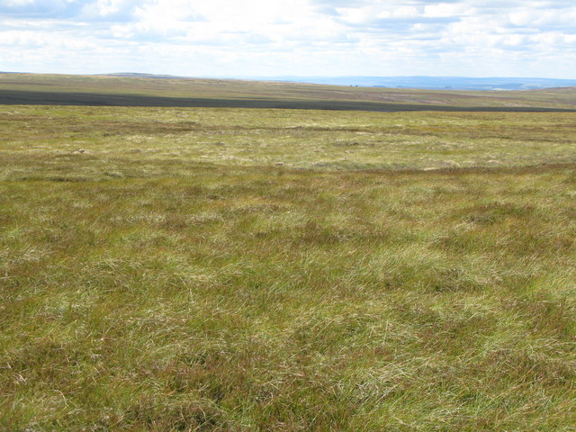 Moorland on Nookton Edge (4)